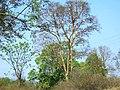 Mudumalai Tiger Reserve - panoramio (24).jpg