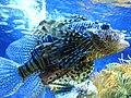 Musee Oceanographique Aquarium2.jpg