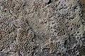 Mushroom (36004188836).jpg