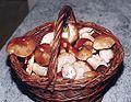 Mushrooms in handbasket Houby v košíku.jpg