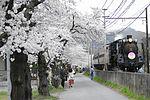 Nagatoro Sakura SL.JPG