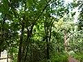 Nairobi Arboretum Park 25.JPG