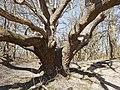 Nationaal Park Kennemerland (41369244701).jpg
