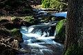 Nationalpark Bayerischer Wald 4.jpg