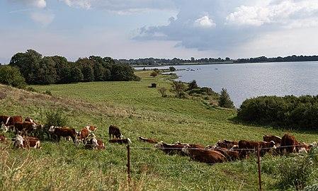 Nationalpark Vorpommersche Boddenlandschaft Mönchgut.jpg
