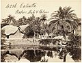 Native huts and palms in Calcutta by Francis Frith.jpg