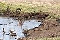 Nature of Ngorongoro Conservation Area (112).jpg