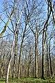 Naturschutzgebiet Haseder Busch - Im Haseder Busch (42).jpg
