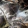 Nazca Lines, Peru (4437745495).jpg