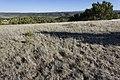 Near Ft. Stanton - Flickr - aspidoscelis (6).jpg