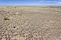 Near Juan Largo Canyon - Flickr - aspidoscelis (1).jpg