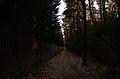 Neuendettelsauer Wald 0160.jpg