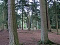New Forest, Hampshire (460997) (9457845100).jpg