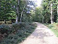 New Forest, Hampshire (461004) (9457884564).jpg