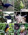 Non-passerine birds (10.3897-zookeys.722.14606) Figure 6.jpg