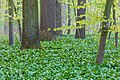 Nordkirchen, Naturschutzgebiet Ichterloh -- 2018 -- 2055.jpg