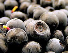 Norwegian blueberries.jpg