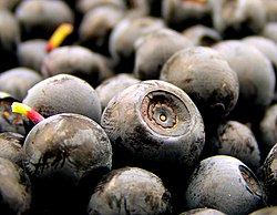 definition of bilberry