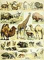 Nouveau Larousse illustré - dictionnaire universel encyclopédique (1898) (14759236416).jpg