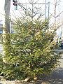 Novogodisnja Jelka-Christmas Tree 5.JPG