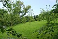 Orchard near S. Allington - geograph.org.uk - 826216.jpg
