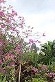 Orchid Gardens Bali, Indonesia - panoramio.jpg