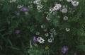 Ossenbeemd Zomeravond bloemen 0506.png