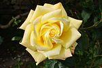 Our garden IMG 1749 (9482570128).jpg