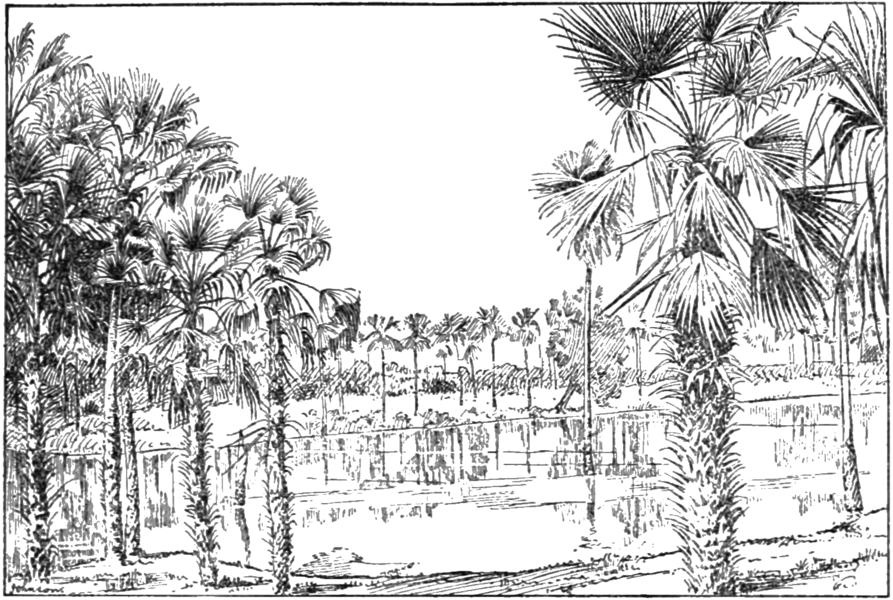 palms - image 3
