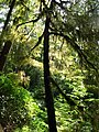 Pacific Rim National Park - Rainforest Trail (3670672189).jpg