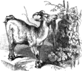 Page 69 illustration to Three hundred Aesop's fables (Townshend).png