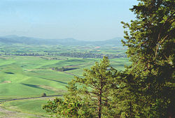 Palouse from Kamiak Butte