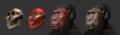 Paranthropus boisei - steps of forensic facial reconstruction.png