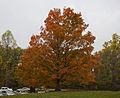 Parque Estatal Brown County, Indiana, Estados Unidos, 2012-10-14, DD 09.jpg