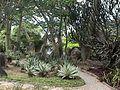 Parque del Este - Jardin Xerofito - 2001 Caracas - Venezuela 001.jpg