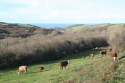 Pasture in the valley at Nanquidno - geograph.org.uk - 1080562.jpg