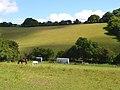 Pastures below Bledlow Ridge - geograph.org.uk - 892055.jpg