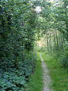 Path 20 06 2006.jpg