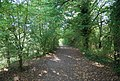 Path south of the River Medway, Haysden Country Park - geograph.org.uk - 1527392.jpg