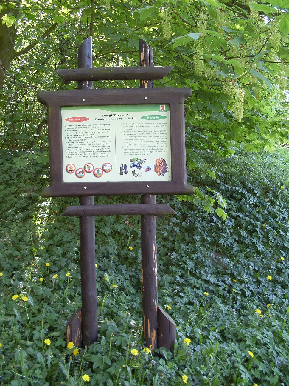 Pce Zielona Ścieżka Zdrowia SDC16520