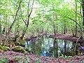 Pelkė Daugirdiškių miške.JPG
