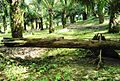Perkebunan kelapa sawit milik rakyat (17).JPG