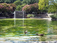 Pond with ducks and waterfall