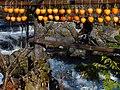 Persimmon drying in Fujinomiya,Shizuoka,Japan(吊るし柿白糸の滝下流) DSCF0011.jpg
