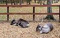 Petting zoo in Vnukovo Outlet Village 04.jpg