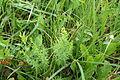 Pflanze (Alice Chodura) 16.JPG