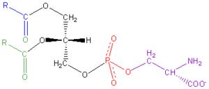 Phosphatidylserine - Image: Phosphatidyl Serine