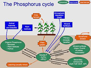 Phosphorus cycle biogeochemical cycle that describes the movement of phosphorus through the lithosphere, hydrosphere, and biosphere
