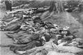 Photo-TokyoAirRaids-1945-3-10-Remains Ueno Park.png