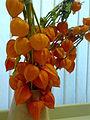 Physalis Chinese Lantern Bouquet.jpg